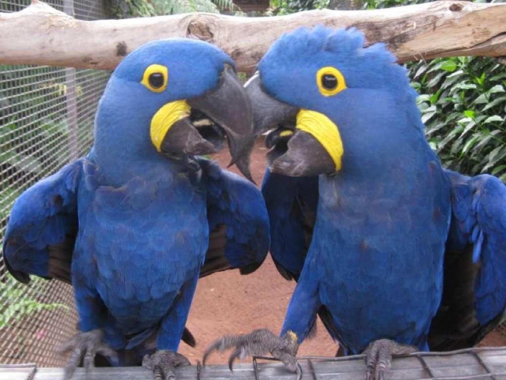 üdülés Kanári-szigetek, Tenerife, Programok magyarul, Dzsungel Park, 6