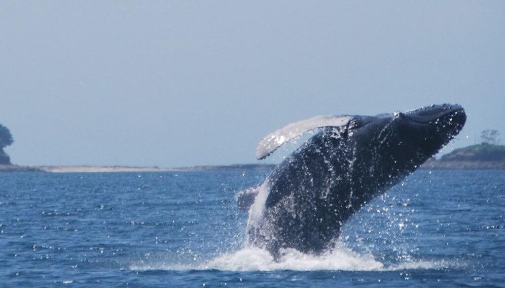 nyaralás, Gran Canaria, Programok magyarul, Hajókirándulás és Delfinles üvegfenekű Hajóval, 4