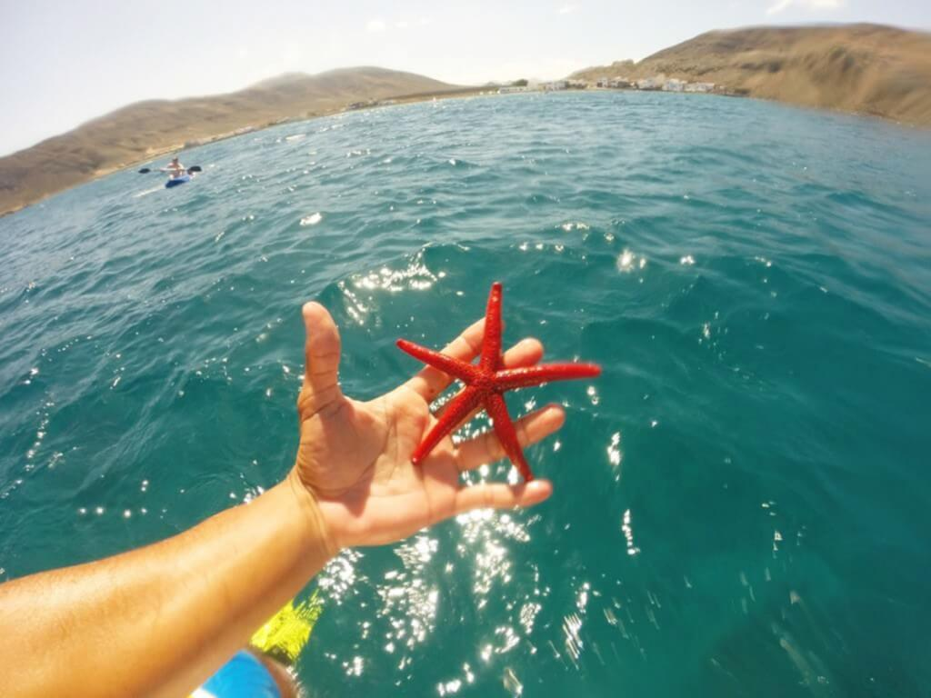 üdülés Kanári-szigetek, Fuerteventura, Programok magyarul, Katamarán Kirándulás Isla De Loboshoz, 3