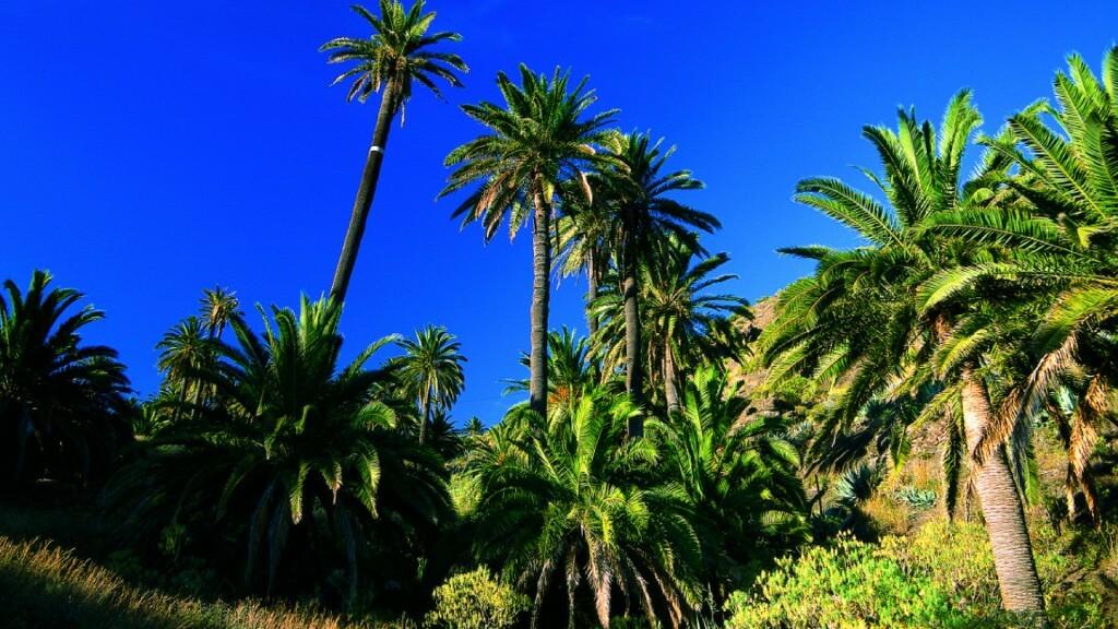 utazási ajánlatok, Tenerife, Programok magyarul, La Gomera Dzsip Túra Magyar Nyelven, 1