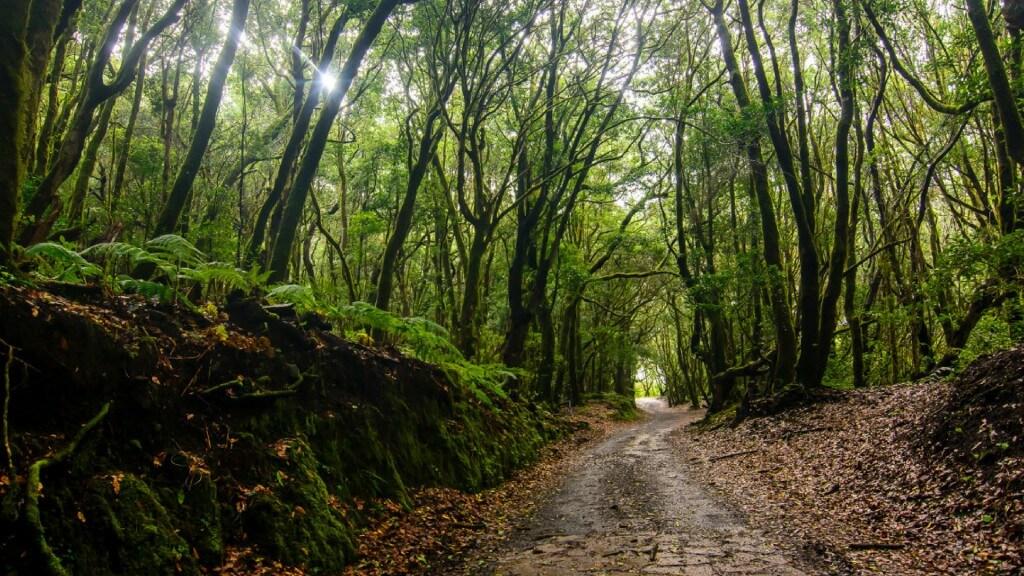 utazási ajánlatok, Tenerife, Programok magyarul, La Gomera Dzsip Túra Magyar Nyelven, 4