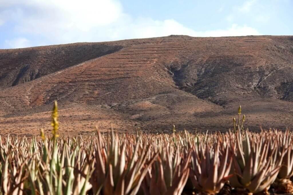 nyaralás, Fuerteventura, Programok magyarul, Észak- és Közép-fuerteventura Felfedezése, 0