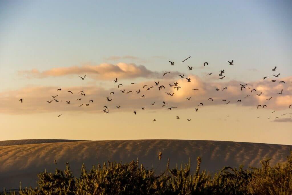 utazási iroda, Fuerteventura, Programok magyarul, Észak- és Közép-fuerteventura Felfedezése, 7