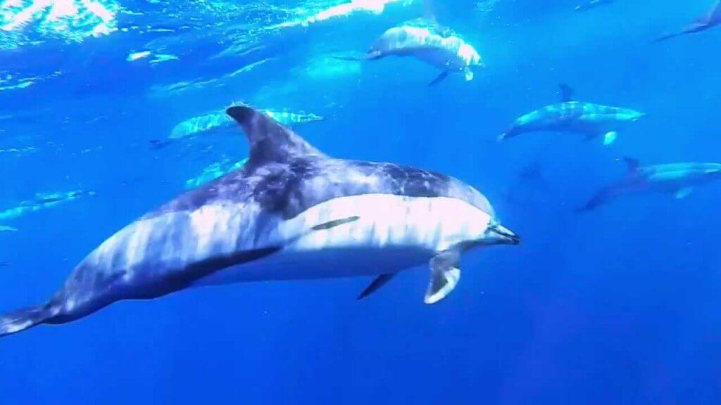 üdülés Kanári-szigetek, Tenerife, Programok magyarul, Ragnarok Viking Hajó Bálna- és Delfinles, 11