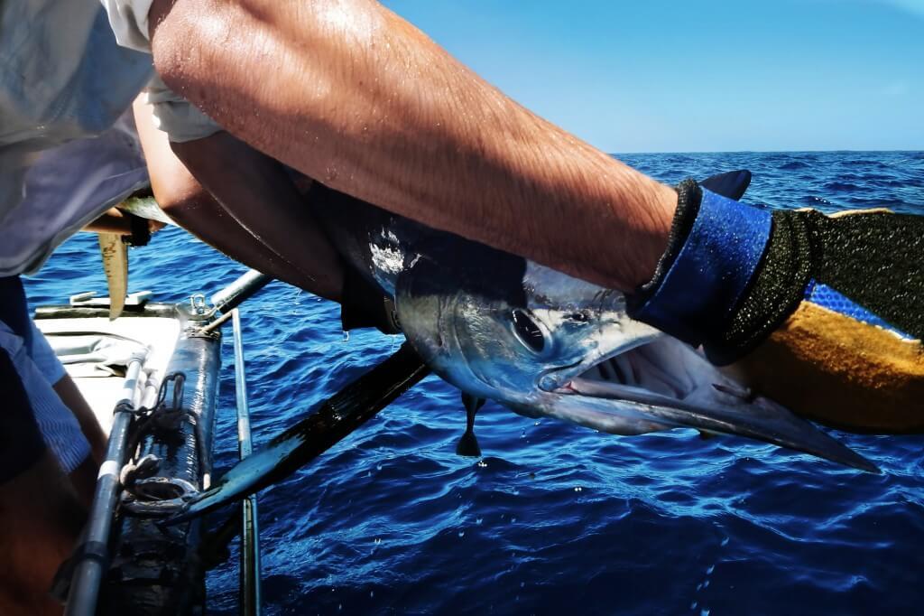 utazás repülővel, Gran Canaria, Programok magyarul, Mélytengeri Horgászat Gran Canarián, 2