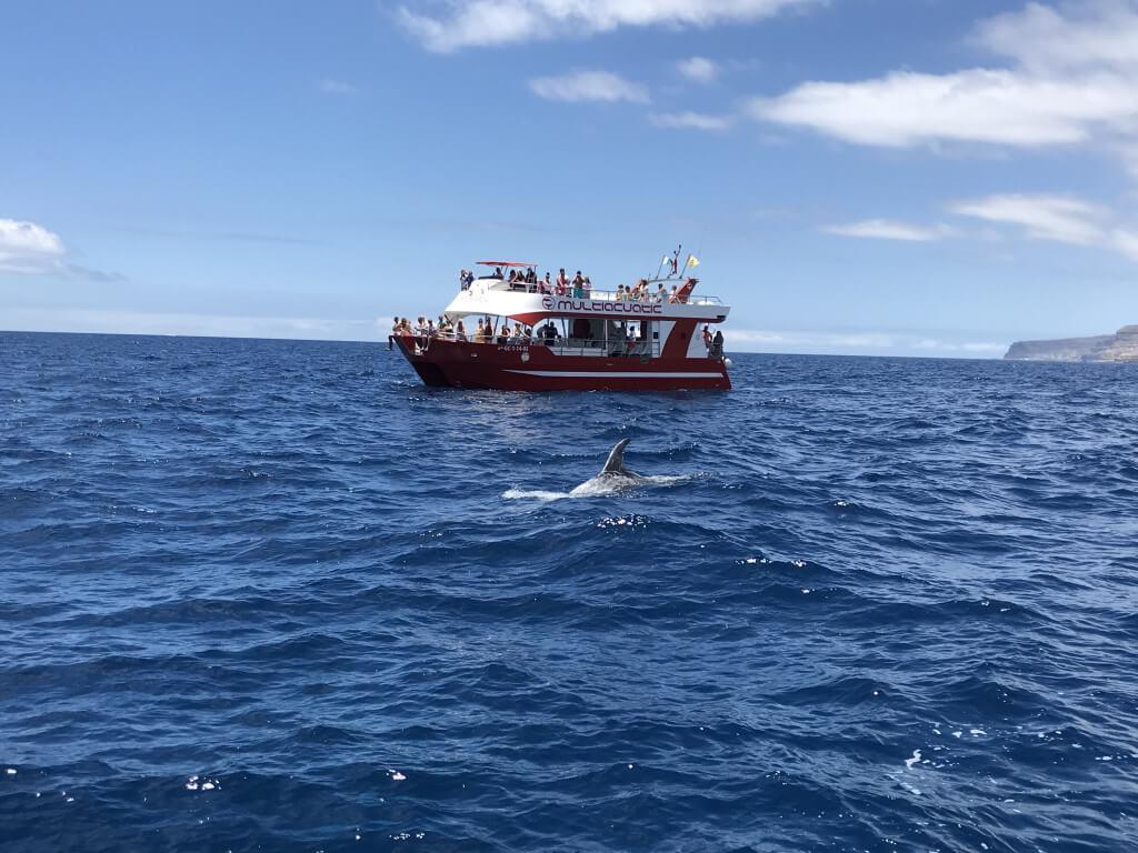 utazási ajánlatok, Gran Canaria, Programok magyarul, Bálna- és Delfinles Katamaránnal, 4