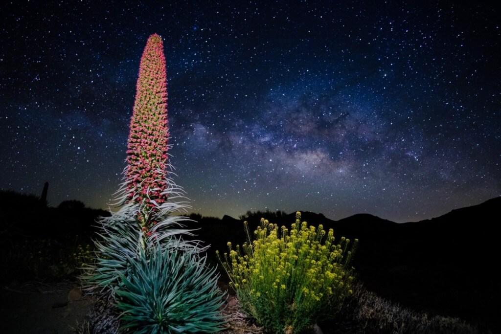 utazási iroda, Tenerife, Programok magyarul, Naplemente és Csillagles A Teidén, 2