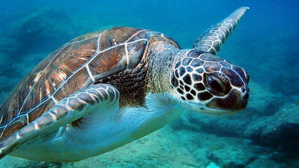 nyaralás all inclusive, Tenerife, Programok magyarul, Hajókirándulás és Bálnales Katamaránnal, 3