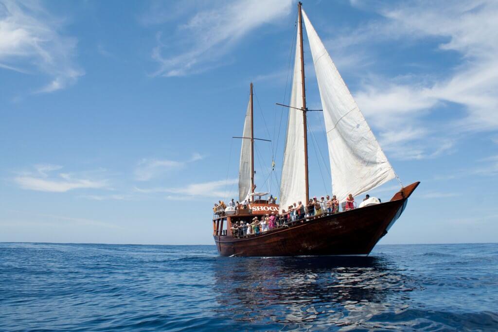 Kanári-szigetek utazás, Tenerife, Programok magyarul, Hajókirándulás és Bálnales Vitorlással, 11
