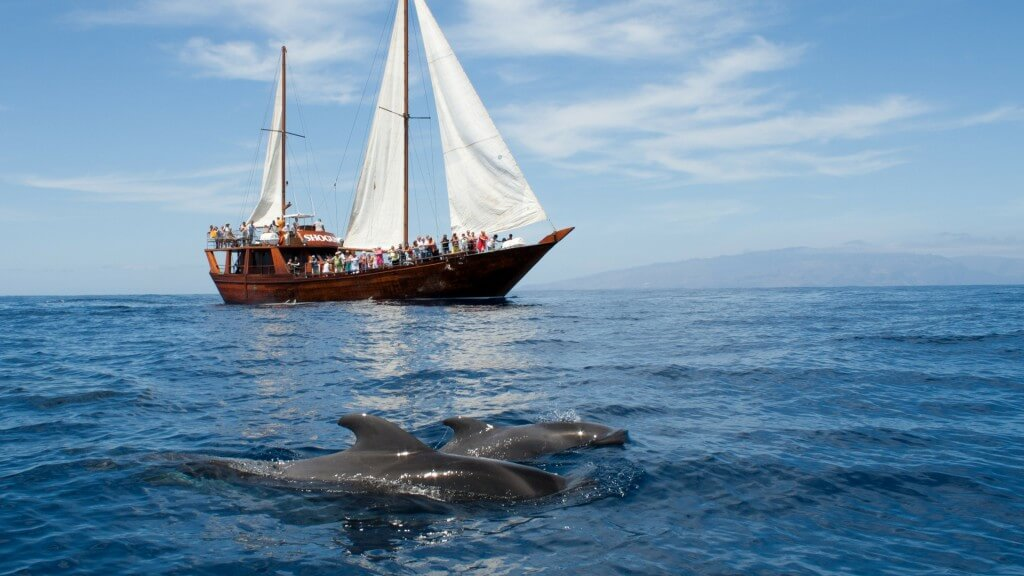 utak Kanári-szigetek, Tenerife, Programok magyarul, Hajókirándulás és Bálnales Vitorlással, 9