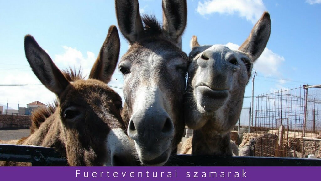 nyaralás all inclusive, Fuerteventura, Programok magyarul, Fuerteventura Szigettúra Magyar Nyelven, 7