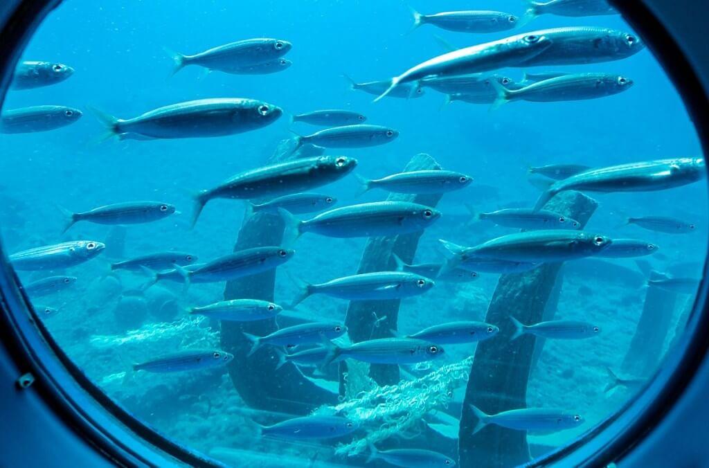 nyaralás olcsón, Gran Canaria, Programok magyarul, Tengeri élővilág Megfigyelése Tengeralattjáróval, 3