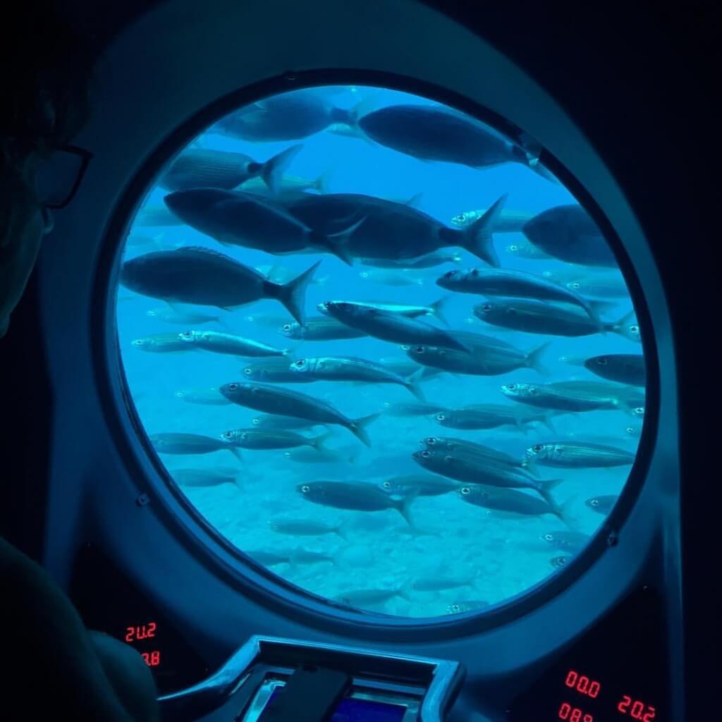utazási iroda, Gran Canaria, Programok magyarul, Tengeri élővilág Megfigyelése Tengeralattjáróval, 0
