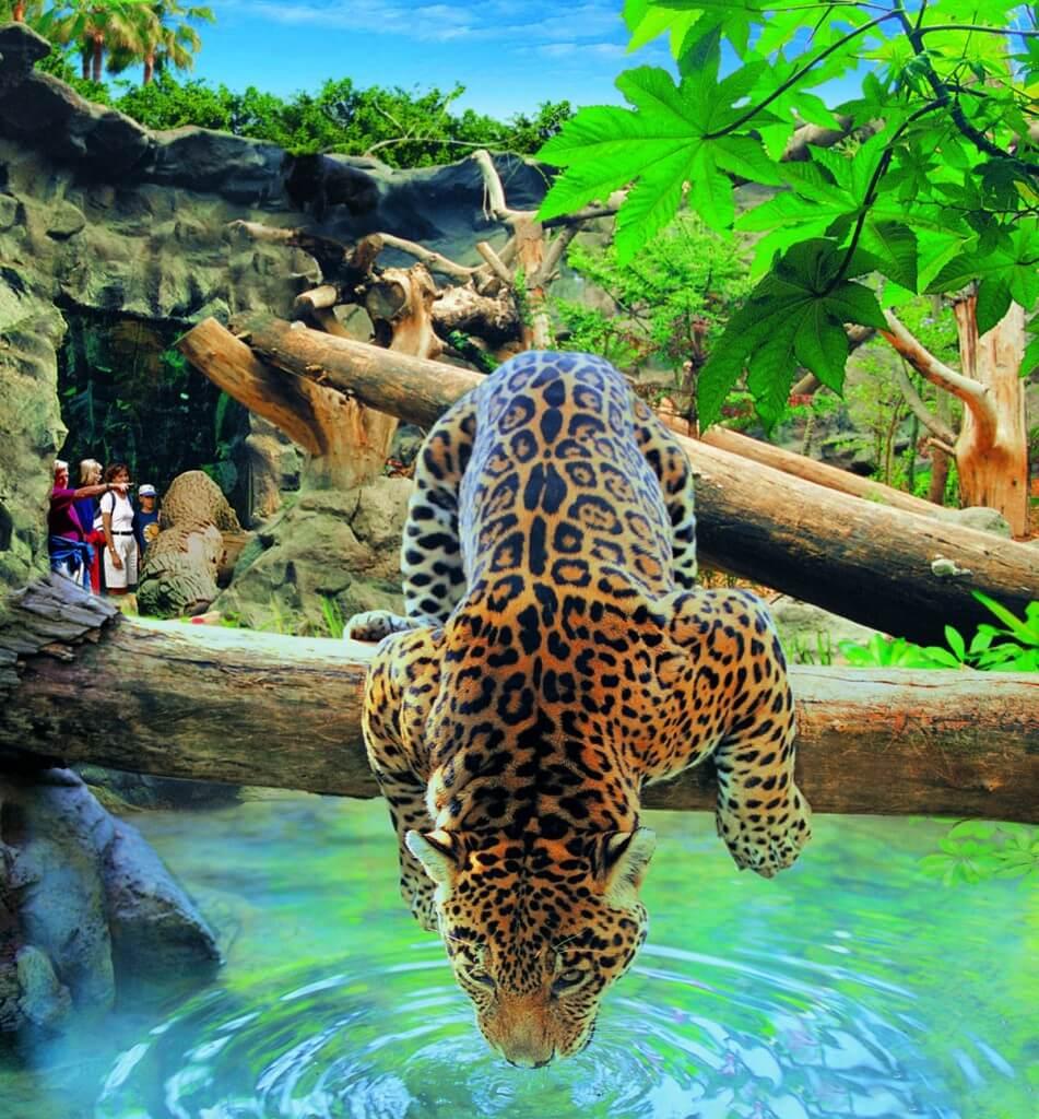 kanári nyaralás, Tenerife, Programok magyarul, Loro Parque, A Világ Legjobb állat- és Növényparkja, 3