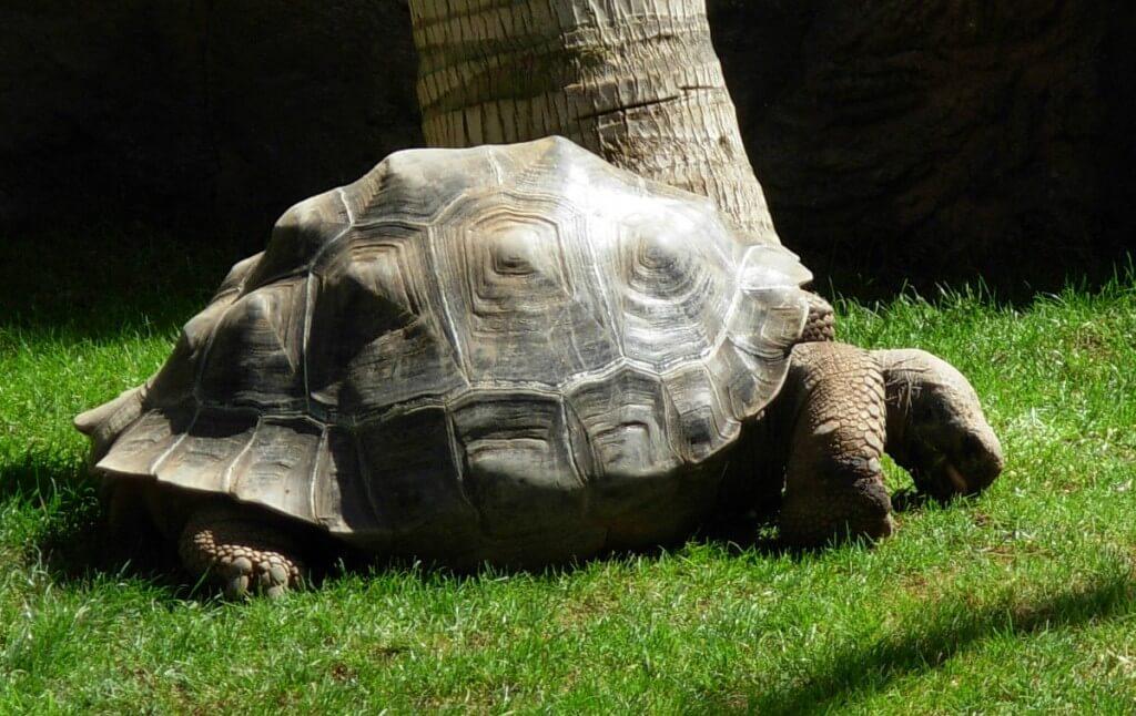 utak Kanári-szigetek, Tenerife, Programok magyarul, Loro Parque, A Világ Legjobb állat- és Növényparkja, 5