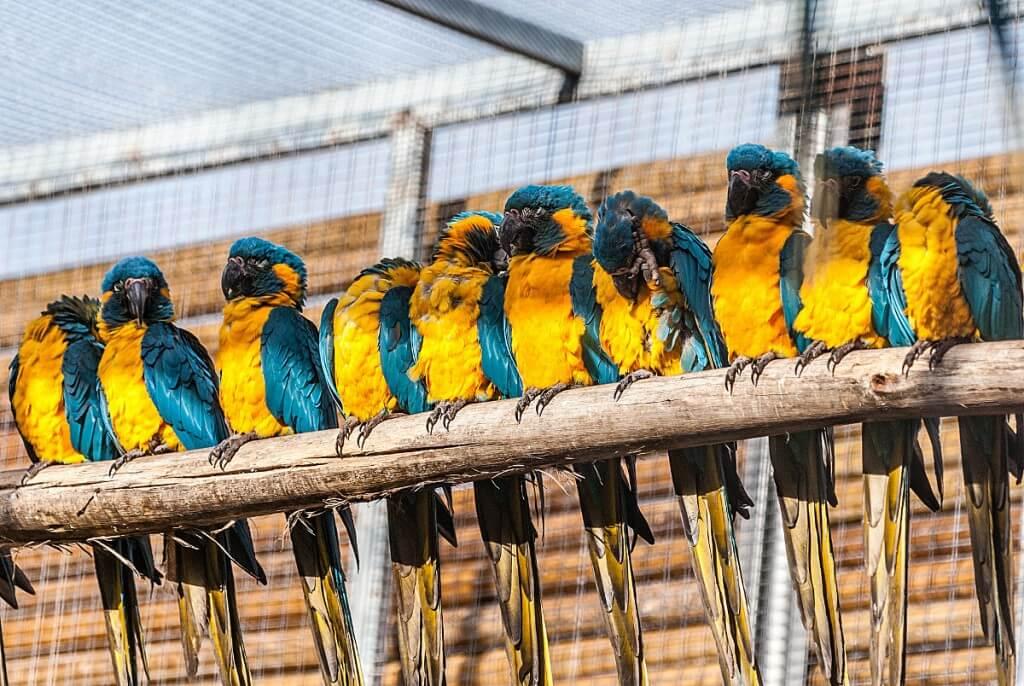 utak Kanári-szigetek, Tenerife, Programok magyarul, Loro Parque, A Világ Legjobb állat- és Növényparkja, 7