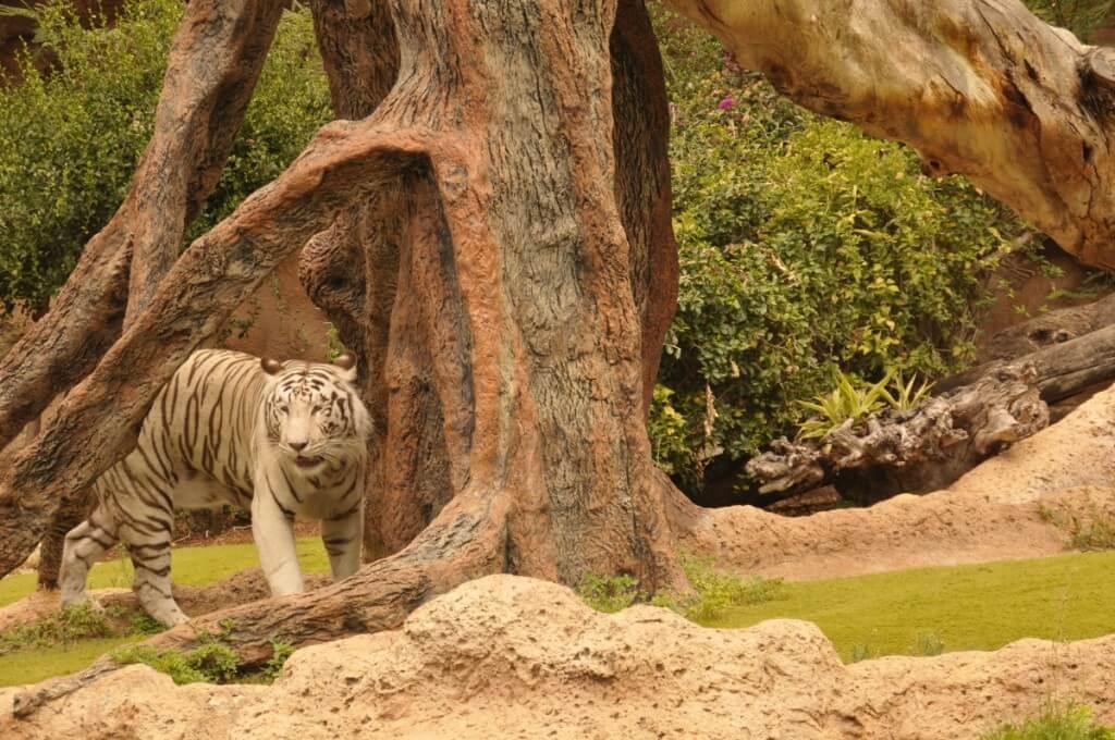 utak, Tenerife, Programok magyarul, Loro Parque, A Világ Legjobb állat- és Növényparkja, 9