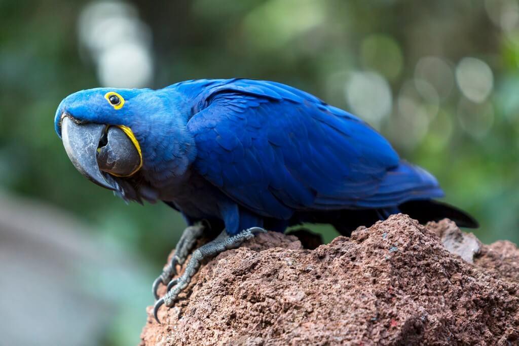 utazások, Tenerife, Programok magyarul, Loro Parque, A Világ Legjobb állat- és Növényparkja, 2