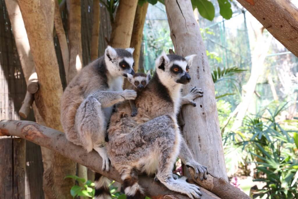 kanári nyaralás, Fuerteventura, Programok magyarul, Oasis Park, 4