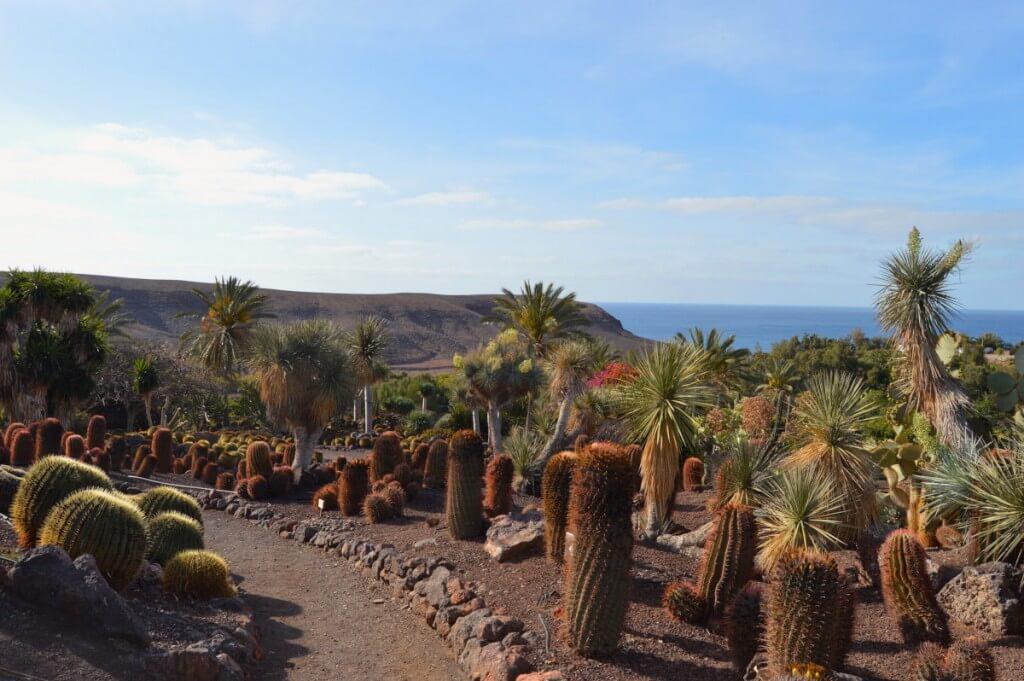 utazási iroda, Fuerteventura, Programok magyarul, Oasis Park, 7