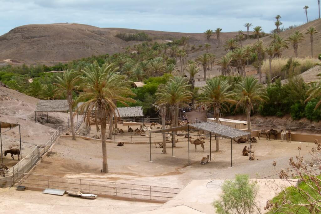 utazások, Fuerteventura, Programok magyarul, Oasis Park, 1