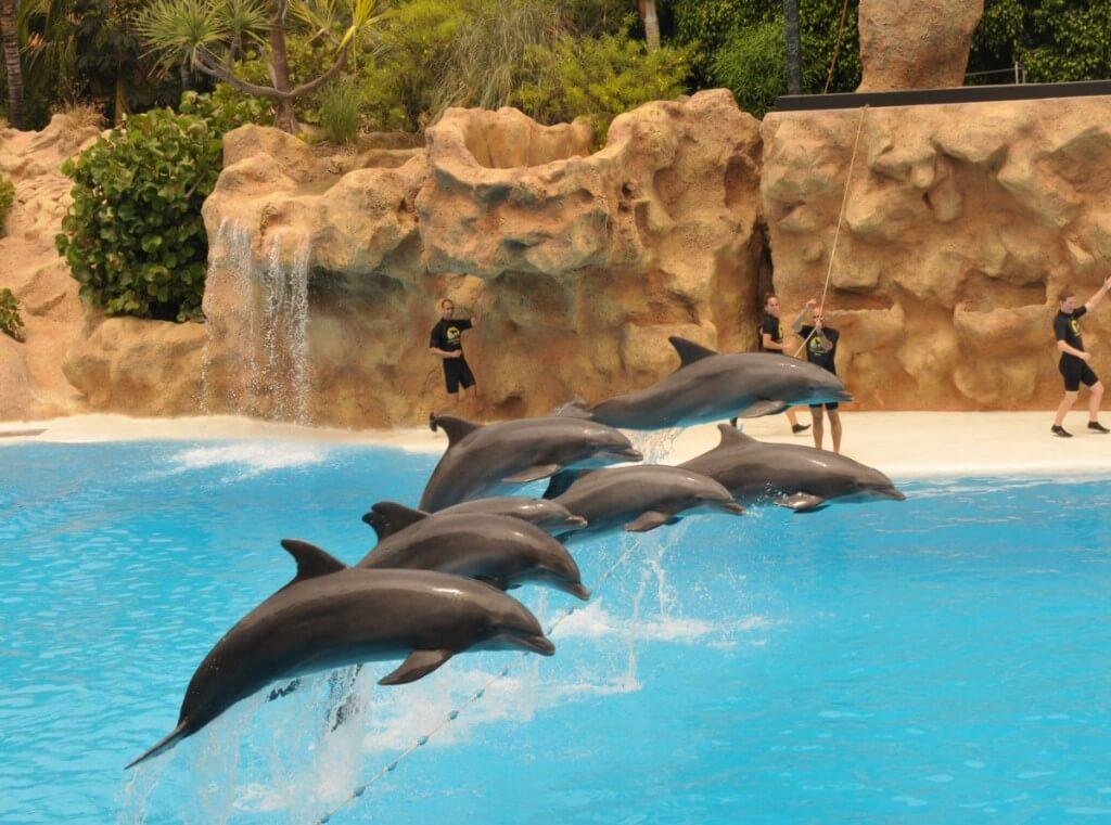 Kanári-szigetek utazás, Tenerife, Programok magyarul, Loro Park és Siam Park Twin Ticket, 15