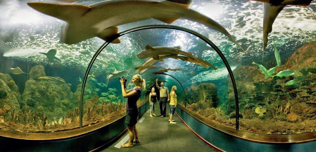 utazás repülővel, Tenerife, Programok magyarul, Loro Park és Siam Park Twin Ticket, 13