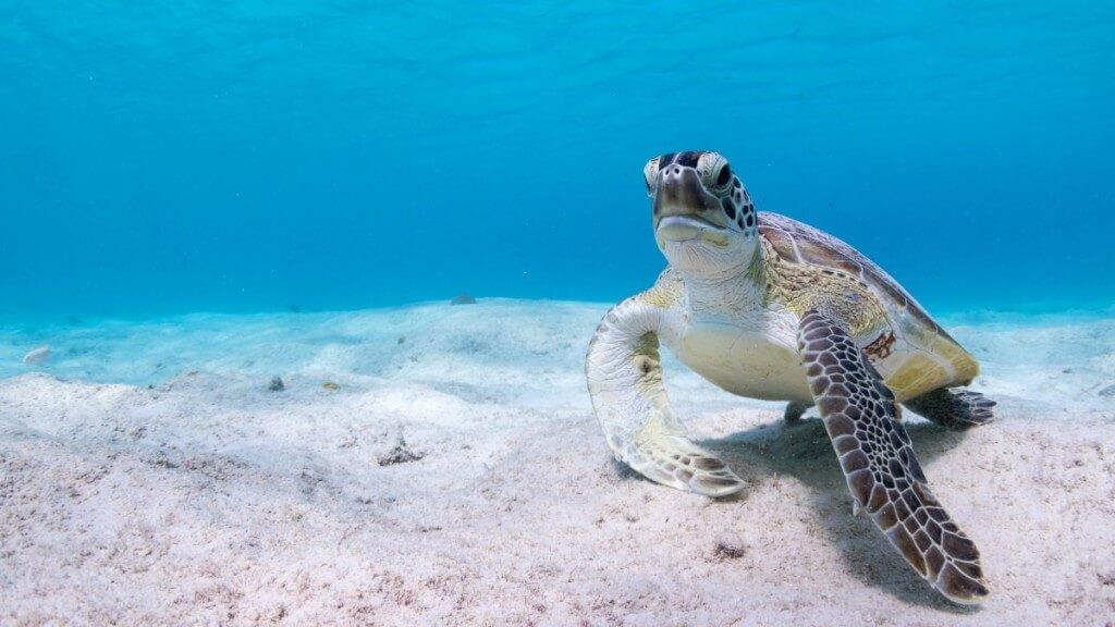 üdülés Kanári-szigetek, Fuerteventura, Programok magyarul, Bálna- és Delfinles üvegfenekű Hajóval, 5