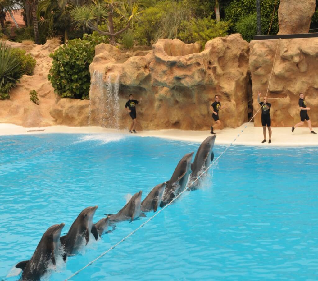 üdülés, Gran Canaria, Programok magyarul, Loro Park, Tenerife, 1