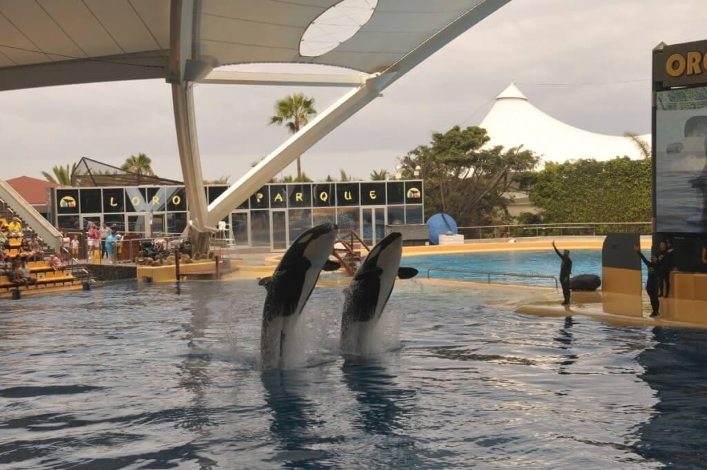 utazási ajánlatok, Gran Canaria, Programok magyarul, Loro Park, Tenerife, 10