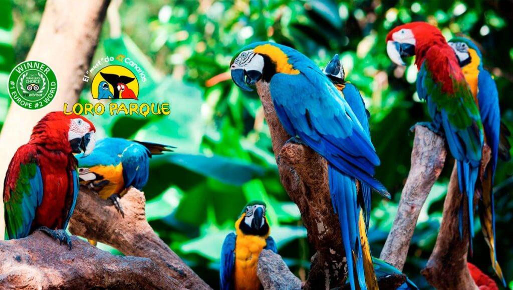 utazási ajánlatok, Gran Canaria, Programok magyarul, Loro Park, Tenerife, 8