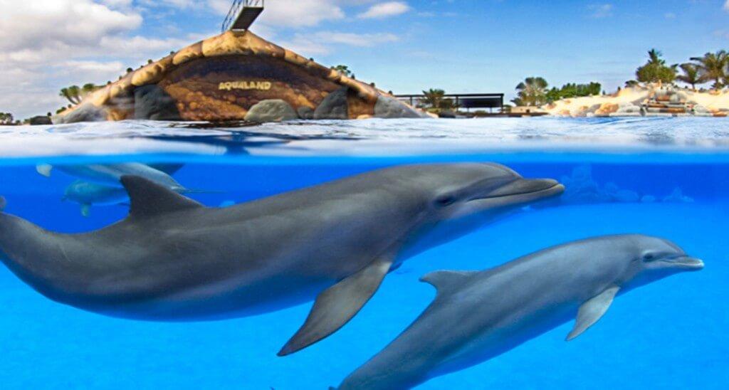 nyaralás all inclusive, Tenerife, Programok magyarul, Aqualand Belépő, 6