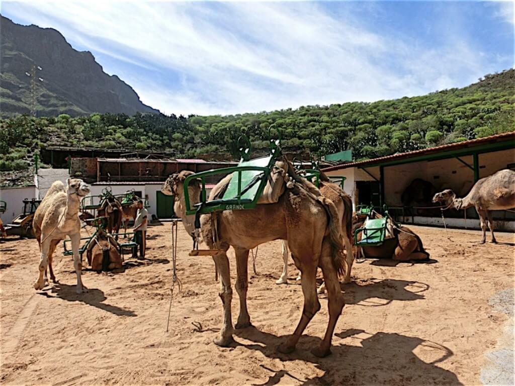 nyaralás olcsón, Gran Canaria, Programok magyarul, Jeep Safari Gran Canaria, 3