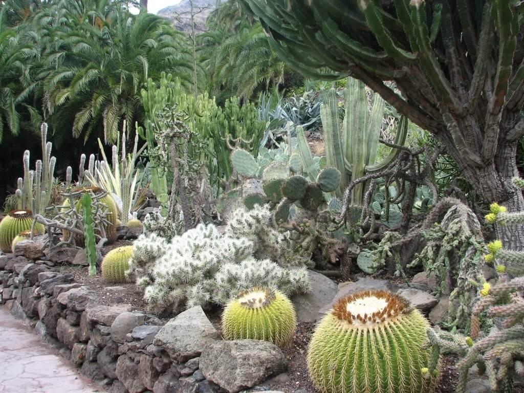 kanári nyaralás, Gran Canaria, Programok magyarul, Palmitos Park, 4