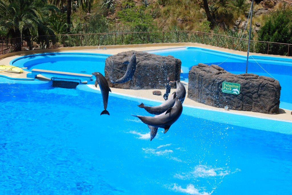 Kanári-szigetek utazás, Gran Canaria, Programok magyarul, Palmitos Park, 0