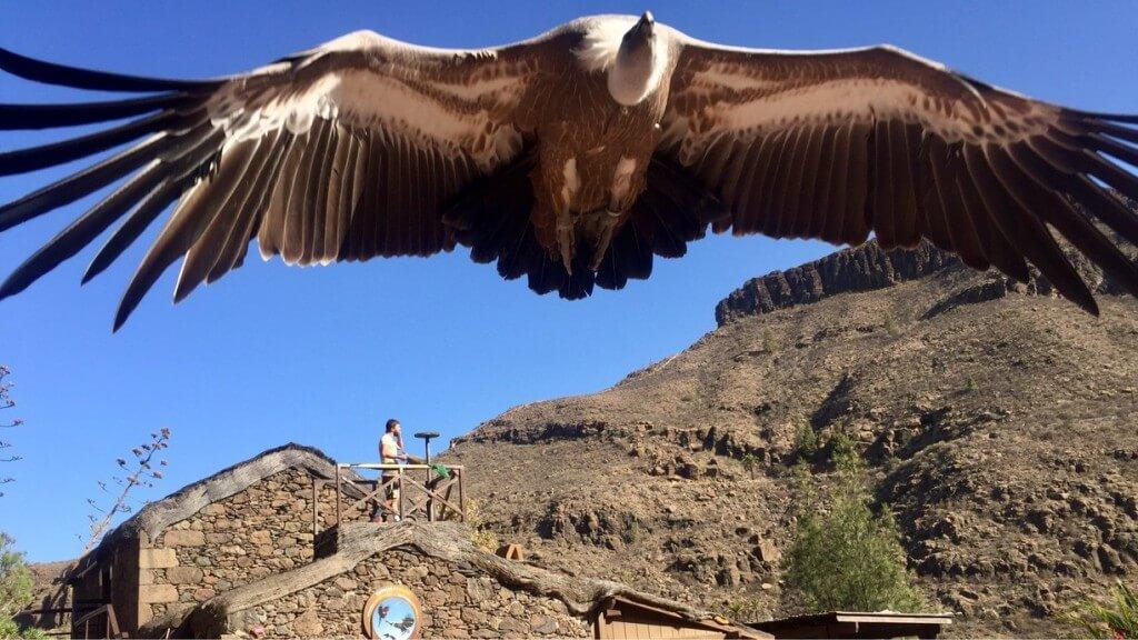 utak, Gran Canaria, Programok magyarul, Palmitos Park, 5