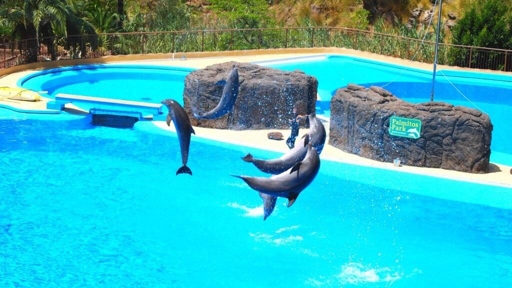 kanári nyaralás, Gran Canaria, Programok magyarul, Aqualand Maspalomas és Palmitos Park Kombi Jegy, 13