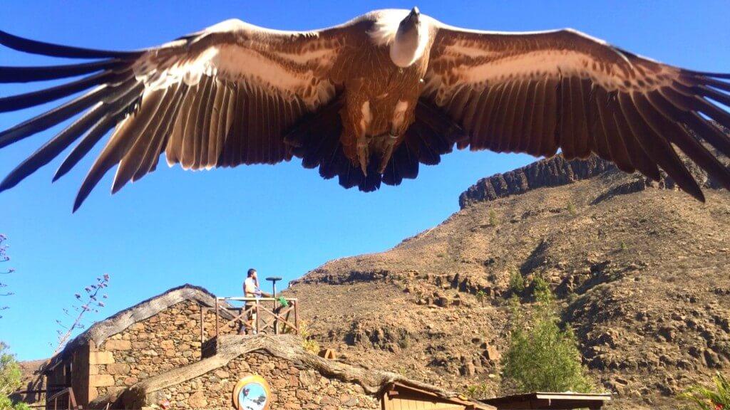 nyaralás all inclusive, Gran Canaria, Programok magyarul, Aqualand Maspalomas és Palmitos Park Kombi Jegy, 11
