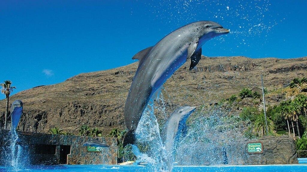 nyaralás all inclusive, Gran Canaria, Programok magyarul, Aqualand Maspalomas és Palmitos Park Kombi Jegy, 7